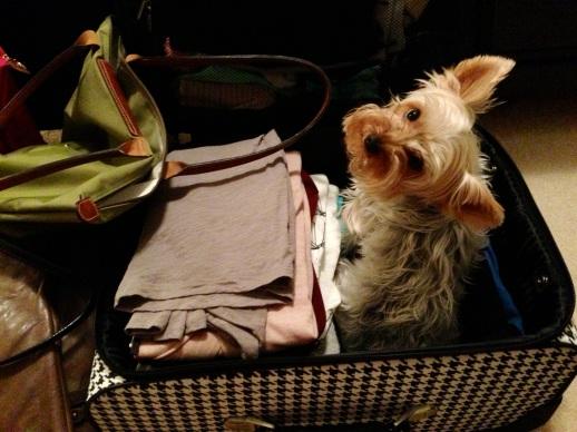 Herc suitcase